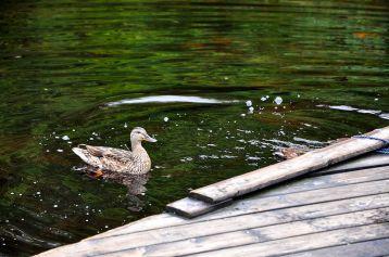 翅膀上的山中湖