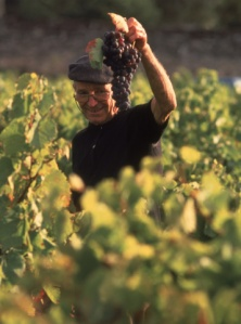 bordeaux_harvest
