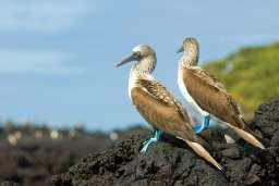 幾月適合去加拉巴哥群島?